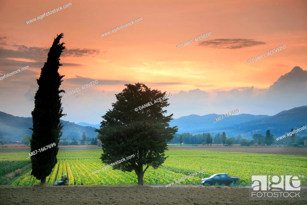 Stock Photo: Umbertide tobacco fields, Umbria, Italy.