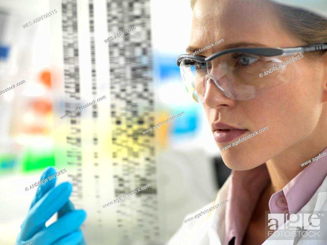 Stock Photo: Scientist examining the results on a DNA autoradiogram in the laboratory.