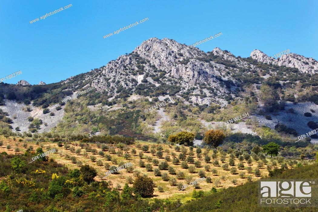 Stock Photo: Olive Groves, Sierra De Las Villuercas, Caceres Province, Spain.