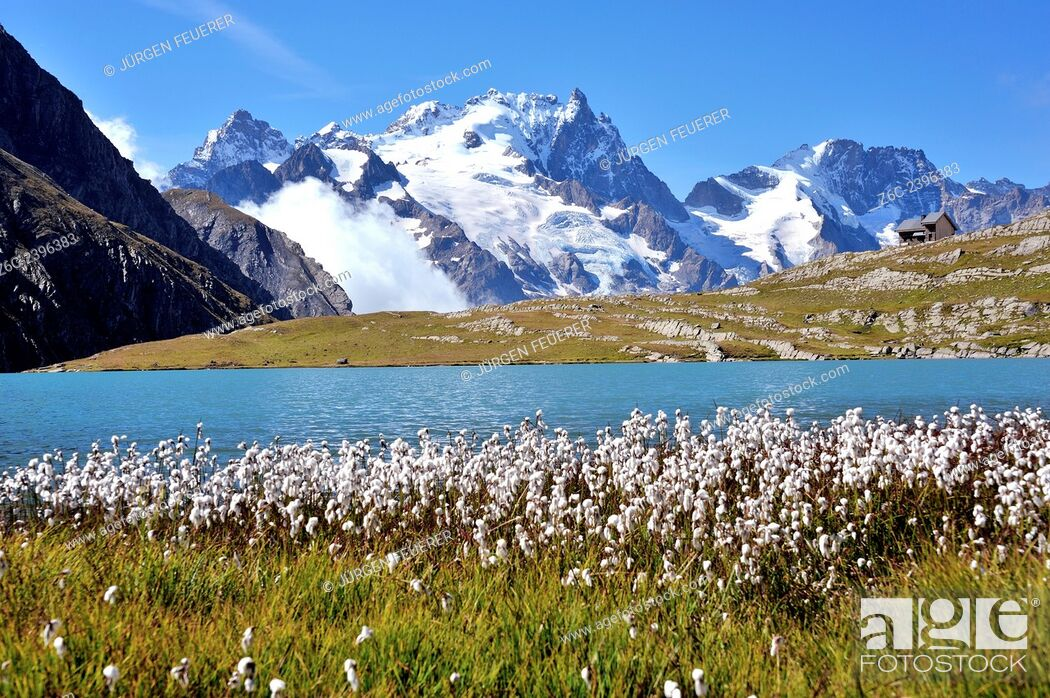 Stock Photo: Mountain lake Lac du Goléon with cotton grass in the foreground and the mountain La Meije, Hautes-Alpes, French Alps, France.