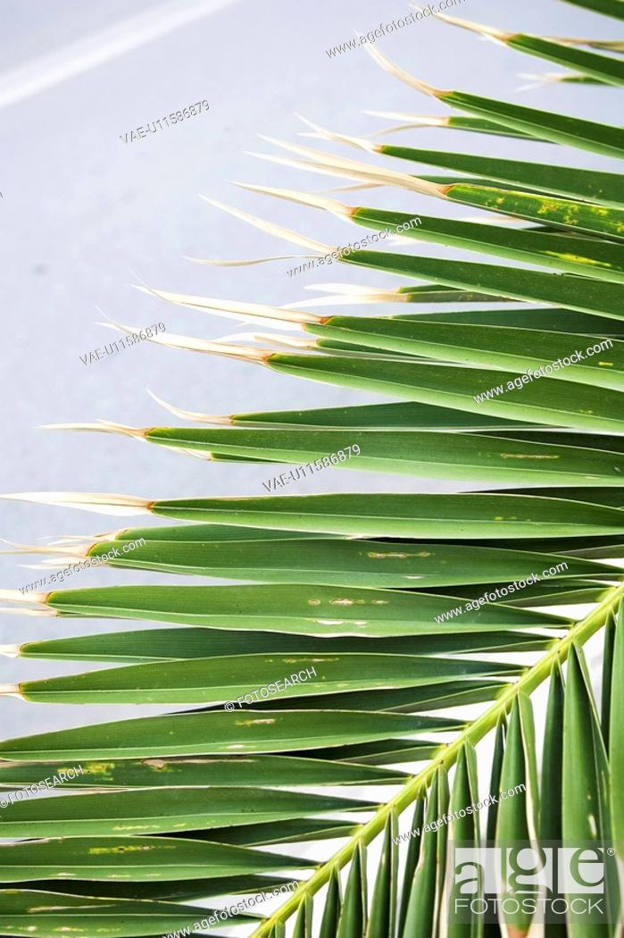 Stock Photo: Calm, Close-Up, Day, Grown, Leaf.