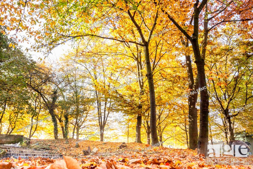 Stock Photo: The change of leafs on trees in autumn time. Vigevano, Lombardy. Italy.