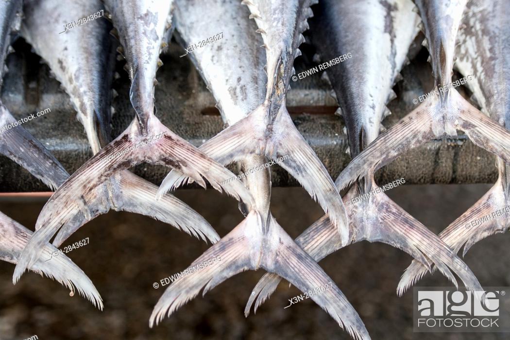 Stock Photo: Muscat, Oman - Muttrah corniche (waterfront) Fish tails in Mutrah Fish Market.