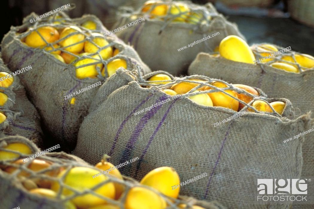 Stock Photo: Burlap sacks filled with fresh squash.