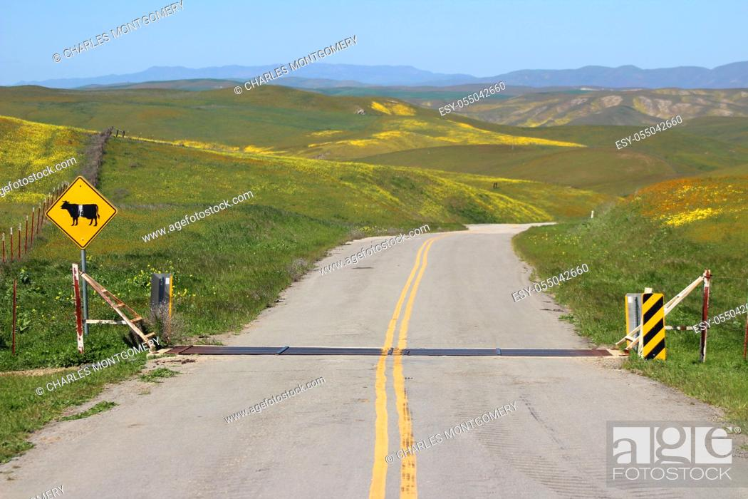 Stock Photo: Springtime in the California hills during super bloom.