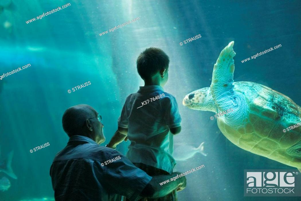 Stock Photo: Grandfather and 3 years old grandson visiting the aquarium.