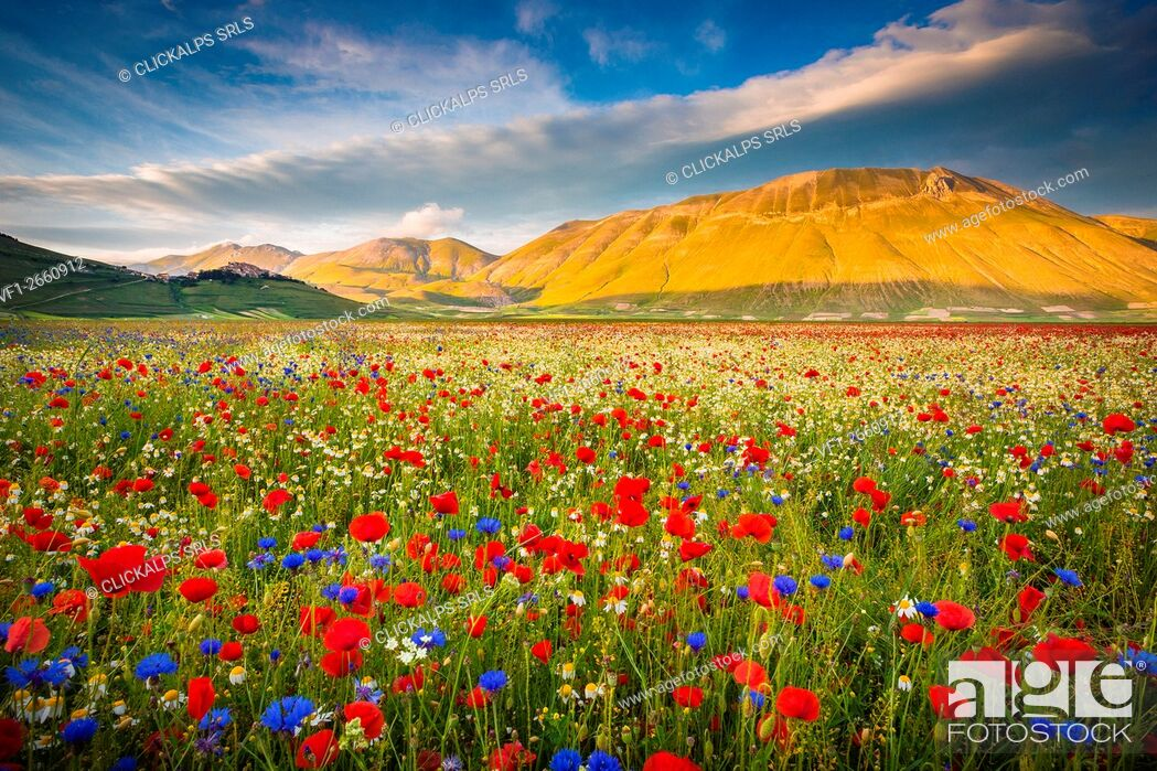 Stock Photo: Castelluccio di Norcia, Umbria, Italy.