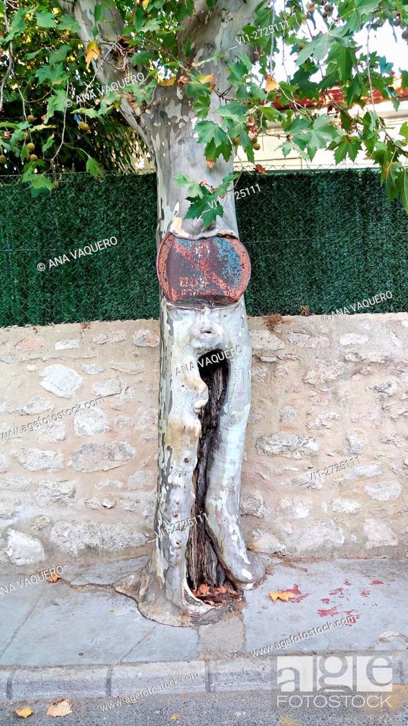 Stock Photo: Nature regains its territory. Avenida de Trujillo, Cáceres, Spain.
