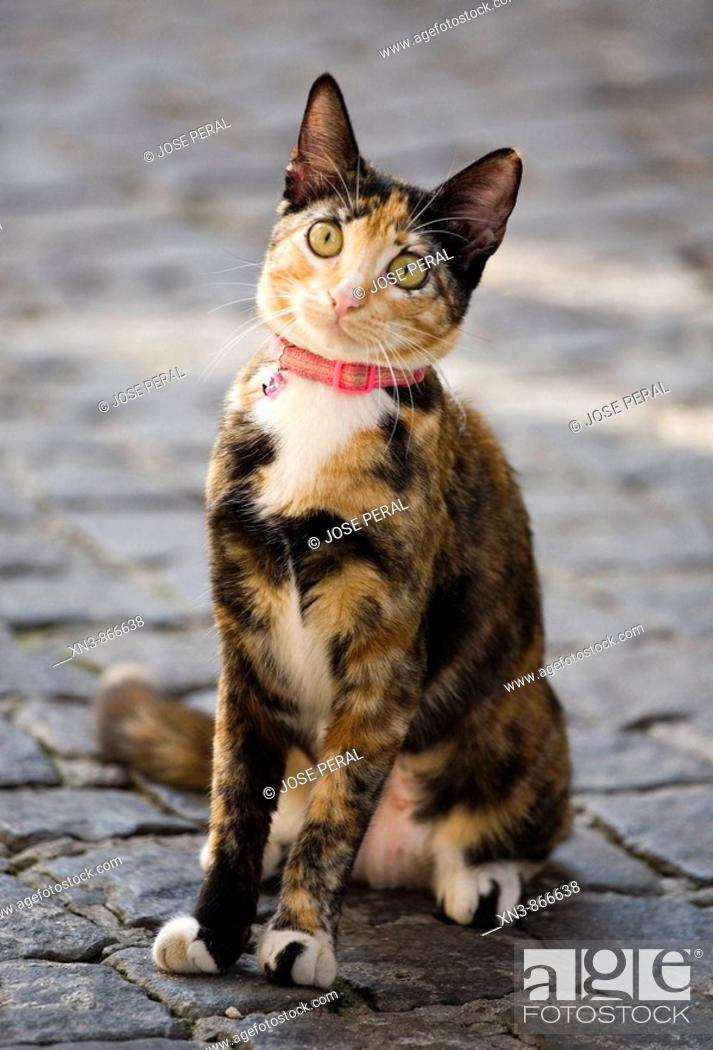 Stock Photo: Cat in street, Lisbon, Portugal.