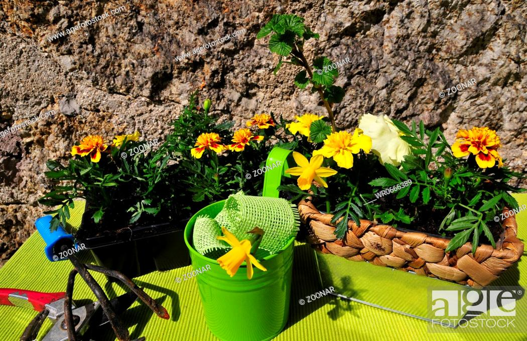 Garten Dekoration Fruhling Stock Photo Picture And Royalty Free