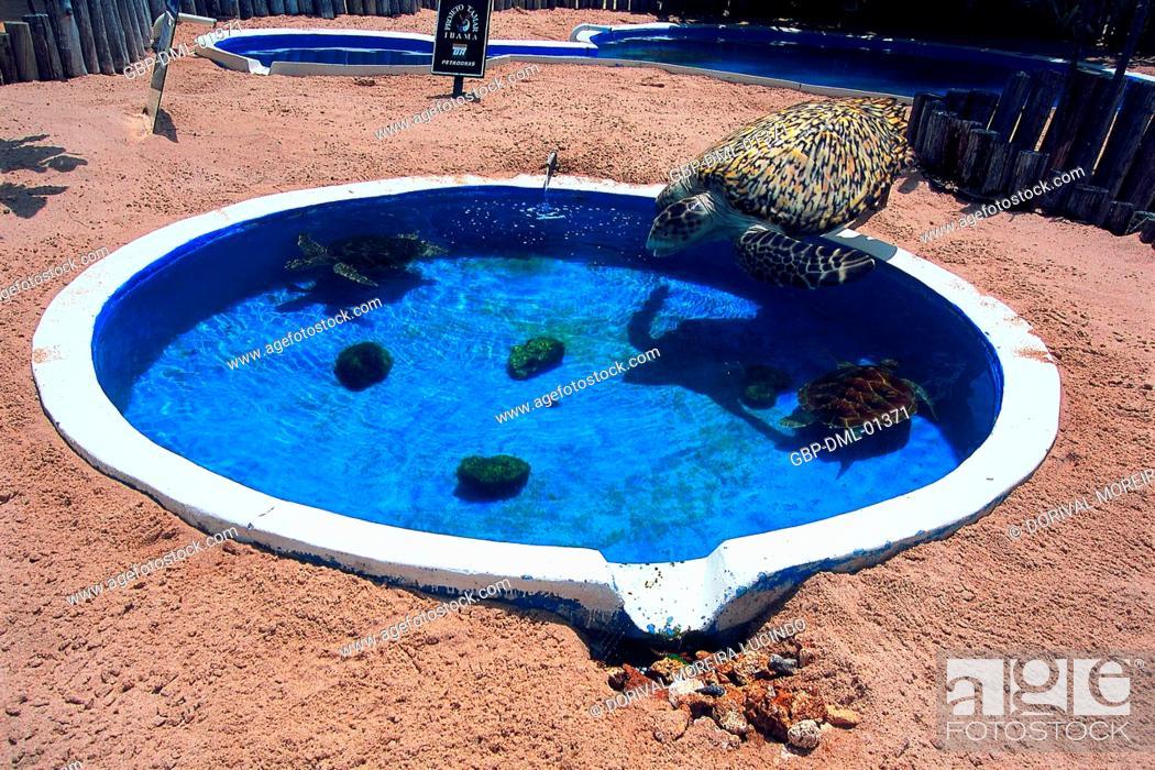 Turtles, Swimming Pool, Forte Beach, S.J. da Mata, Bahia ...