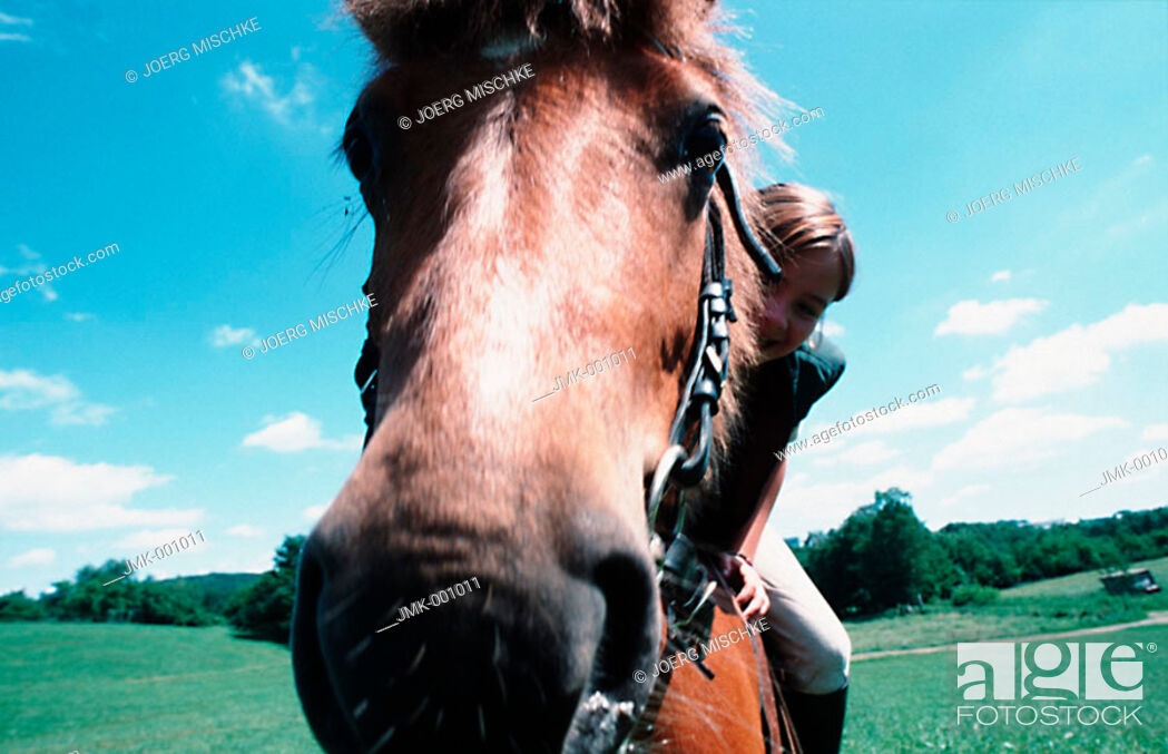 Stock Photo: A girl riding a horse, sitting in the saddle, in the open countryside.
