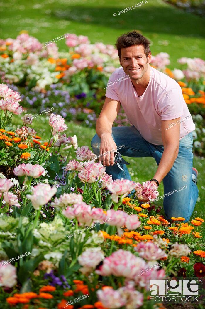 Stock Photo: Gardener cutting flowers, Pruning secateurs, Hand tool, Garden, .