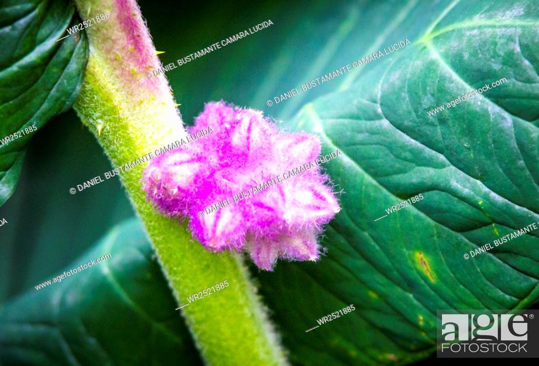 Imagen: Plantas, Colombia.