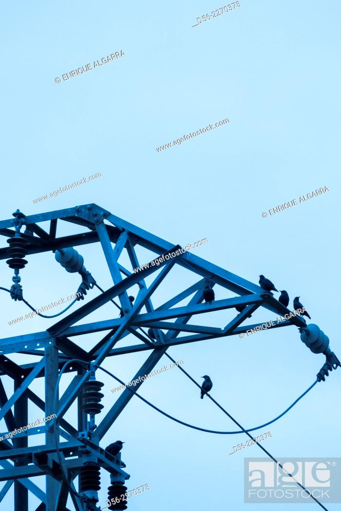 Stock Photo: Birds on electrical tower, Valencia, Spain.