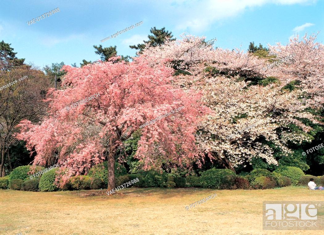 Stock Photo: flower, plant, plants, spring, tree, flowers, nature.