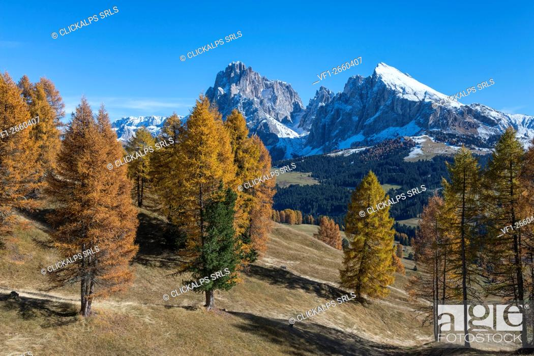 Stock Photo: Alpe di Siusi/Seiser Alm, Dolomites, South Tyrol, Italy. Autumn colors on the Alpe di Siusi/Seiser Alm with the Sassolungo/Langkofel and the.
