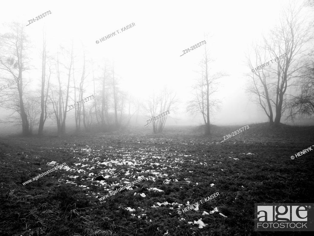 Imagen: Misty trees.