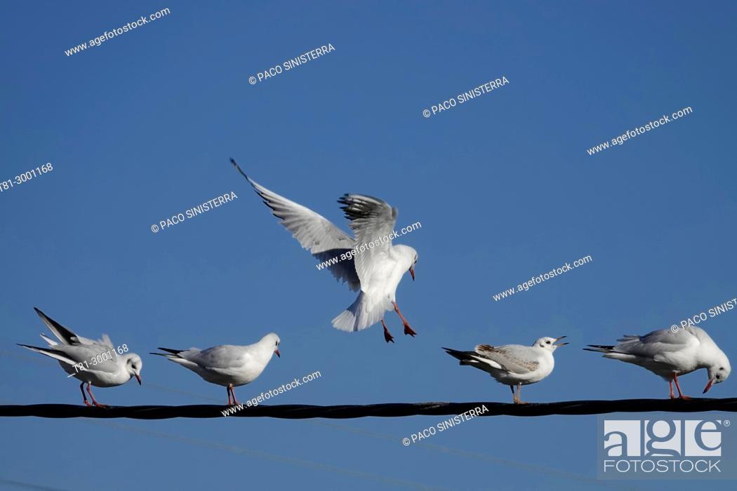 Imagen: seagulls, Valencia.