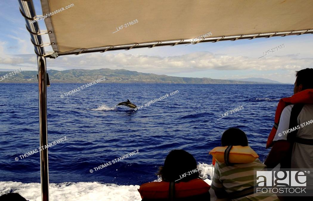 Stock Photo: Dolphins, Whale watching near the southcoast of Sao Miguel Island, Azores, Portugal.