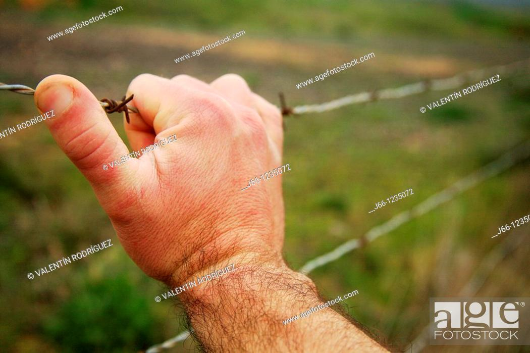 Stock Photo: Hand on barbed wire.