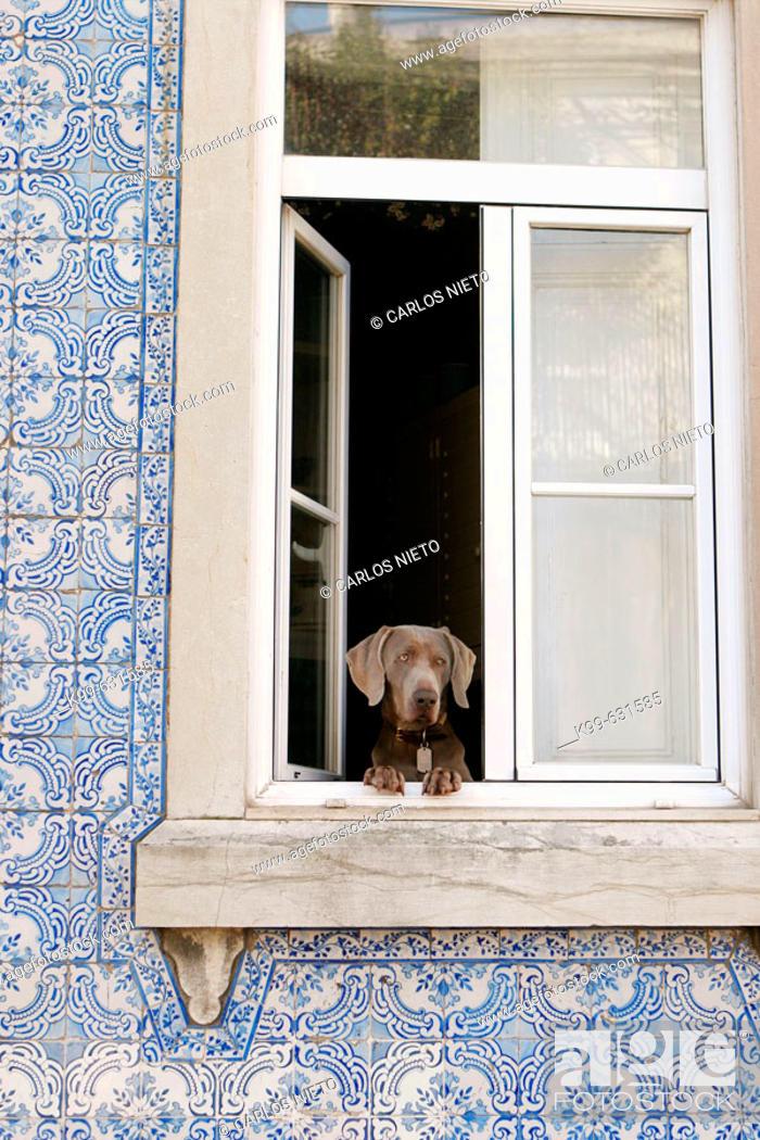 Stock Photo: Dog at window, Lisbon. Portugal.