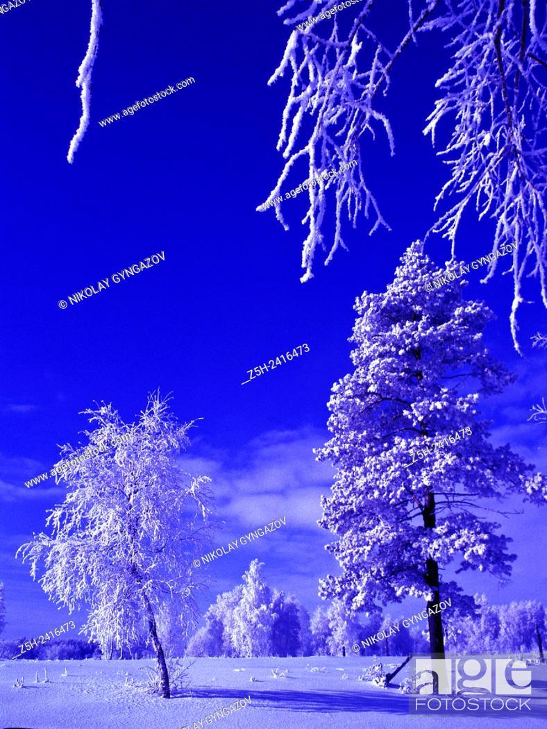 Stock Photo: Russia. Landscape in cold tones.