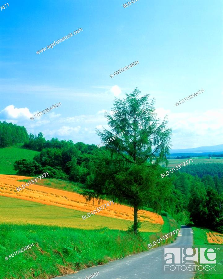 Stock Photo: Straight road in the field.