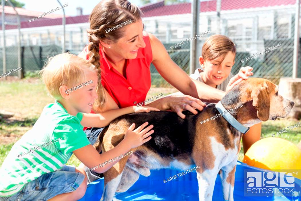 Stock Photo: Family washing dog in pool of animal shelter taking care and playing with the animal.