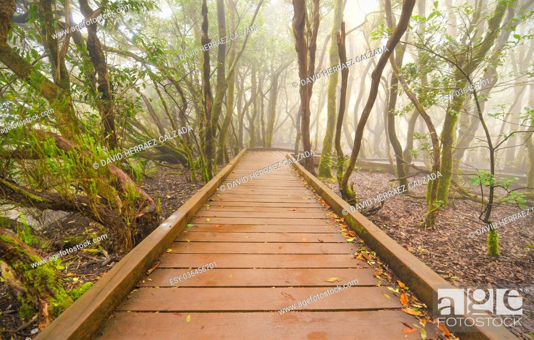 Stock Photo: Foggy laurisilva forest in Anaga mountains, Tenerife, Canary island, Spain.