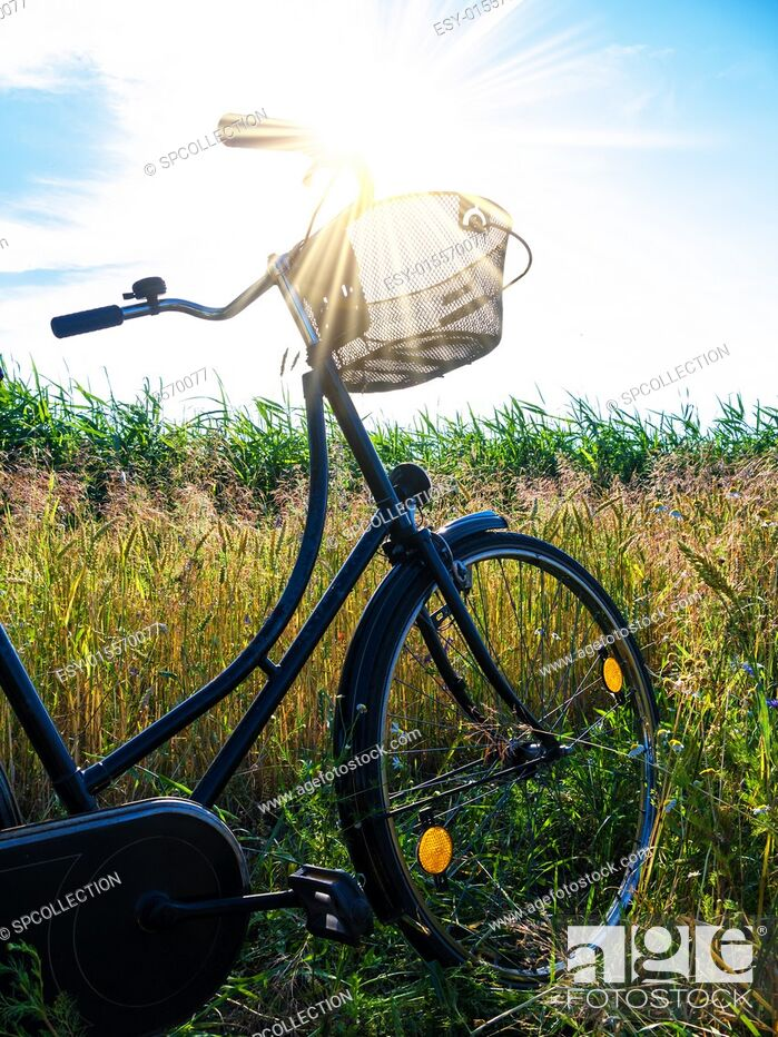 Photo de stock: cornfield and a bicycle with bouquet and blue sky in summer.