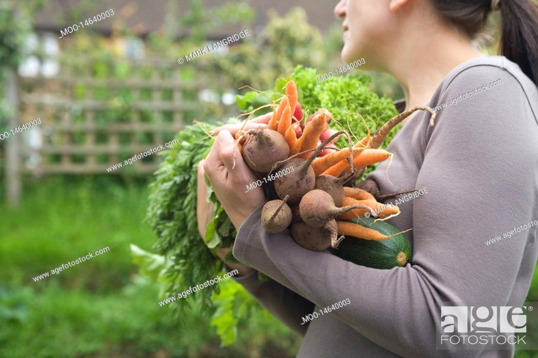 Stock Photo: Woman holding vegetables in garden mid section side view.