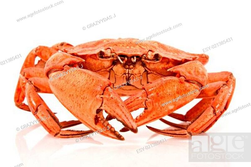 Stock Photo: red crab on white background.
