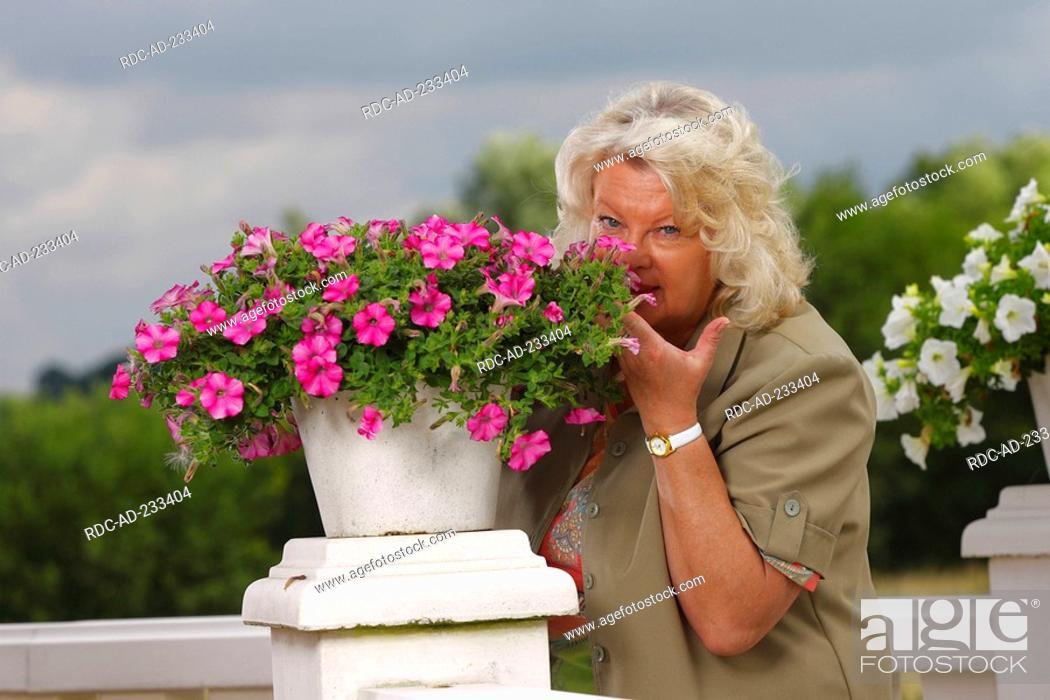 Stock Photo: Woman smelling at petunia, Petunia hybride, flavour.