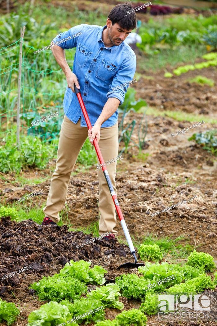 Stock Photo: Farmer farming the land, Hoe, Urban vegetable garden, Urban orchards, Ekogunea, Donostia, San Sebastian, Gipuzkoa, Basque Country, Spain, Europe.