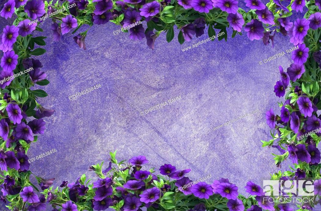 Stock Photo: Purple petunia flower frame on oil painting canvas background copy space with painted texture.