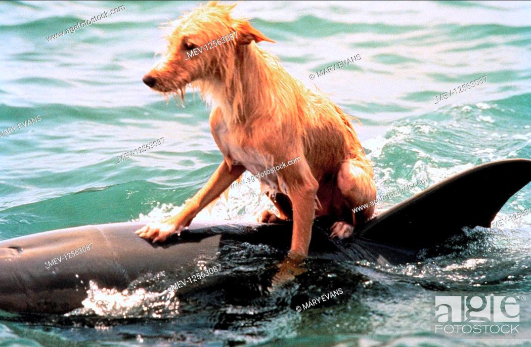 Zeus The Dog Sits On Dolphin Film Zeus And Roxanne 1997