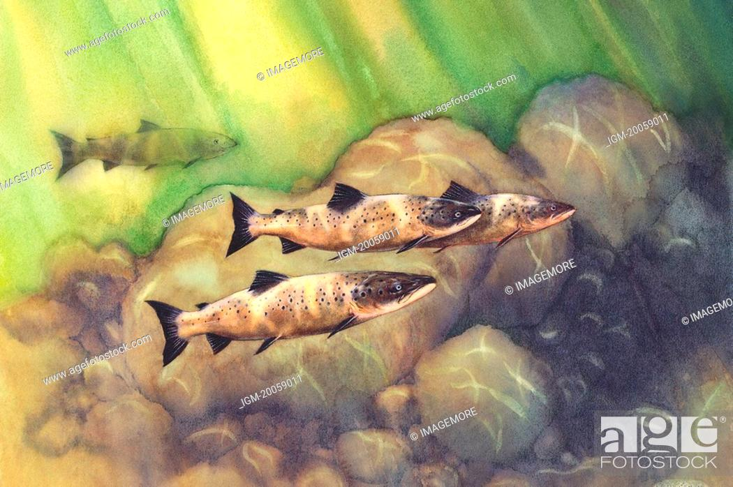 Stock Photo: Animal, Watercolor painting of fishes in the water.