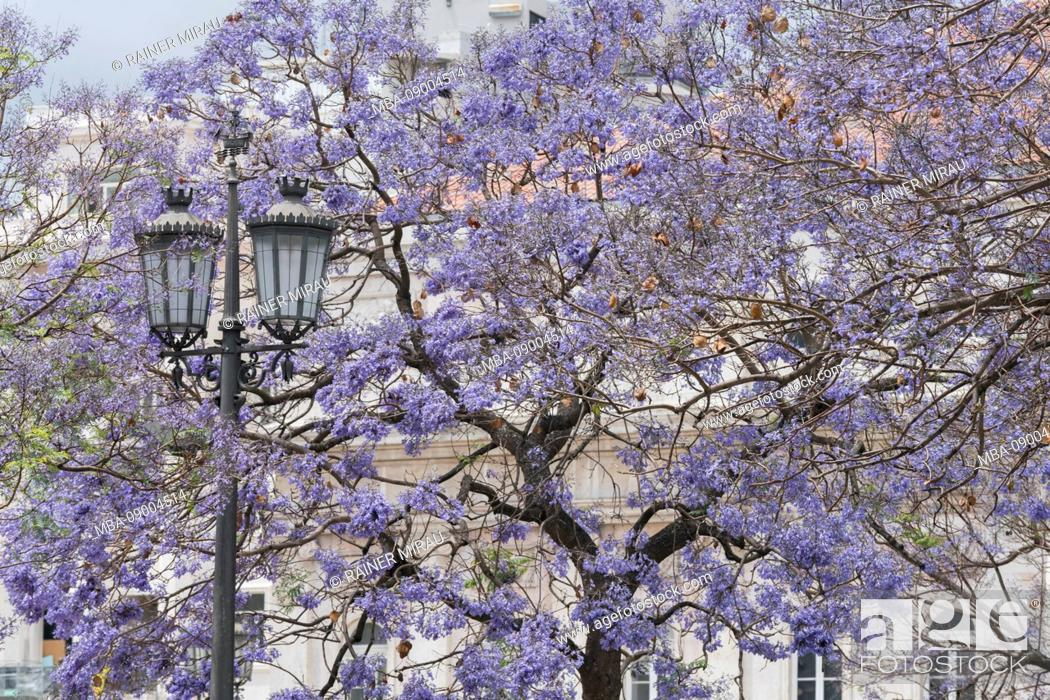 Stock Photo: Flowering trees at Praça Rossio, Lisbon, Portugal.