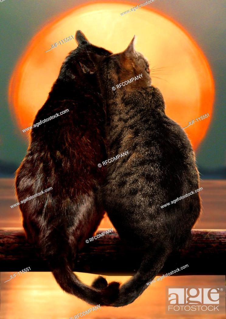 Stock Photo: two domestic cats - sunset.