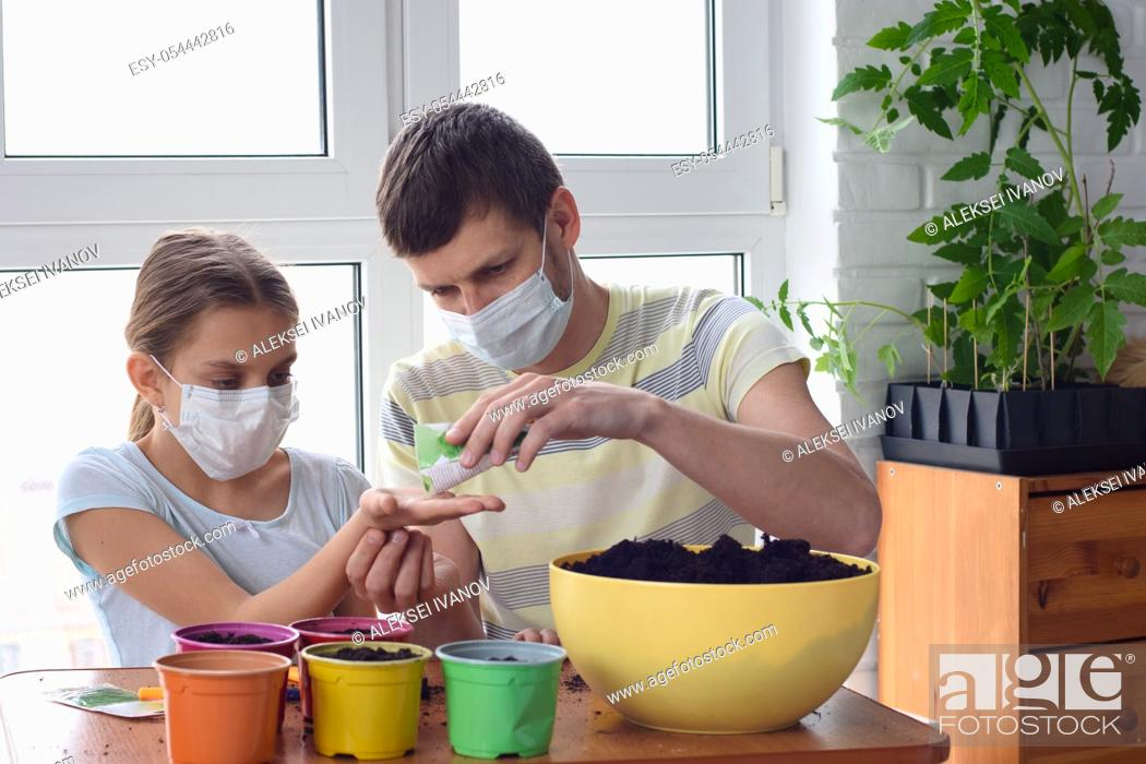 Stock Photo: Dad and daughter in quarantine at home, planting plants in pots.