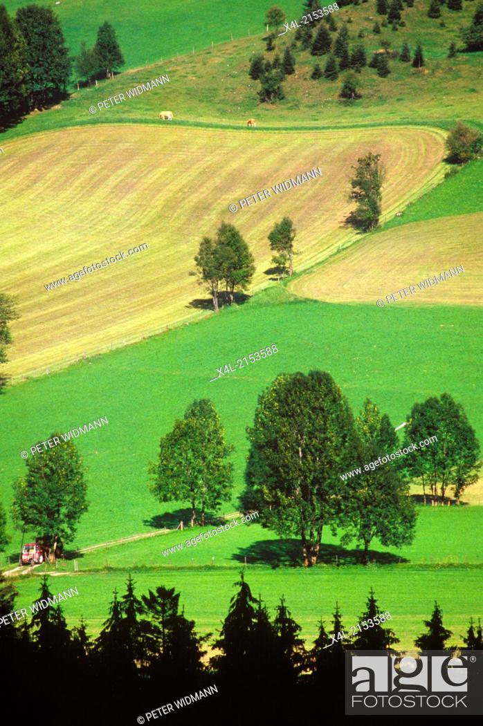 Stock Photo: pasture, trees, Austria, Salzburg, Tennengau, Abtenau.