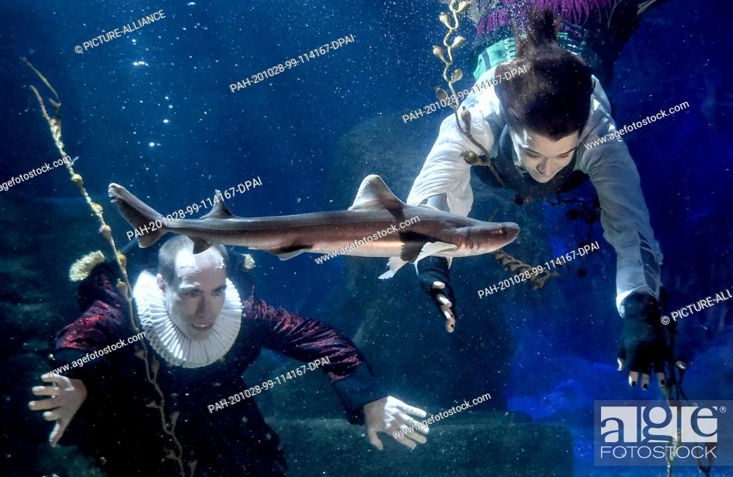 Stock Photo: 28 October 2020, Berlin: At Sea Life Berlin a diver in a witch costume and a diver in a vampire costume dive together with fish in the Atlantic basin.
