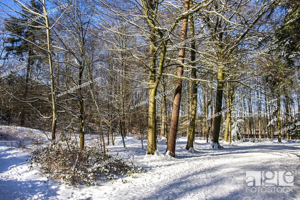 Imagen: Dutch winter landscape with snow, The Netherlands, Europe.