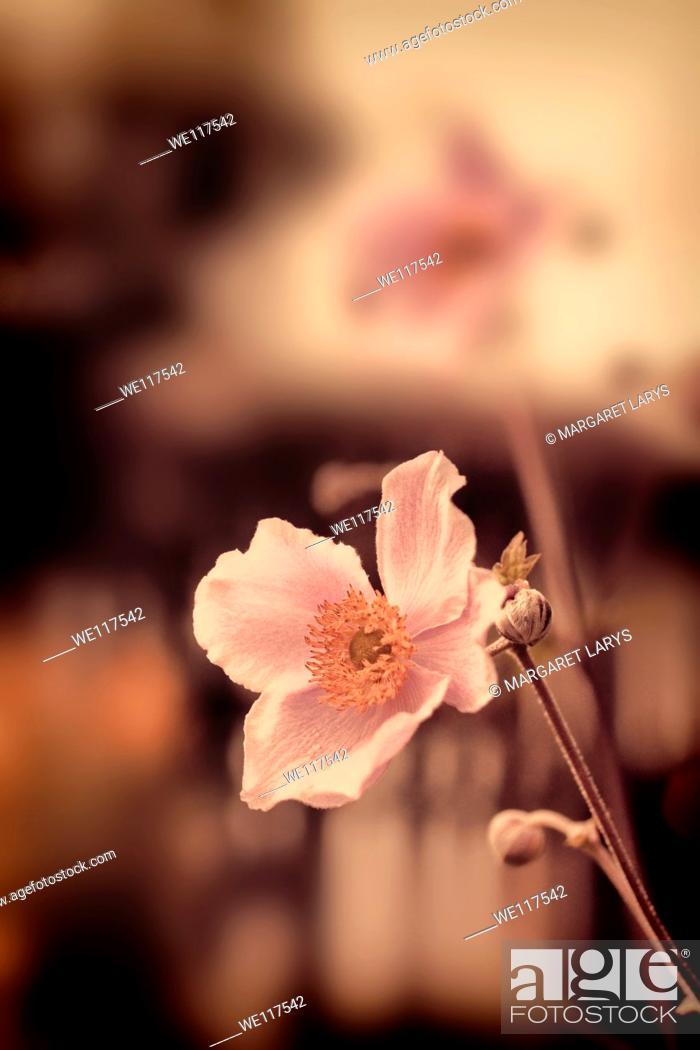 Stock Photo: Beautiful summer flowers vintage.
