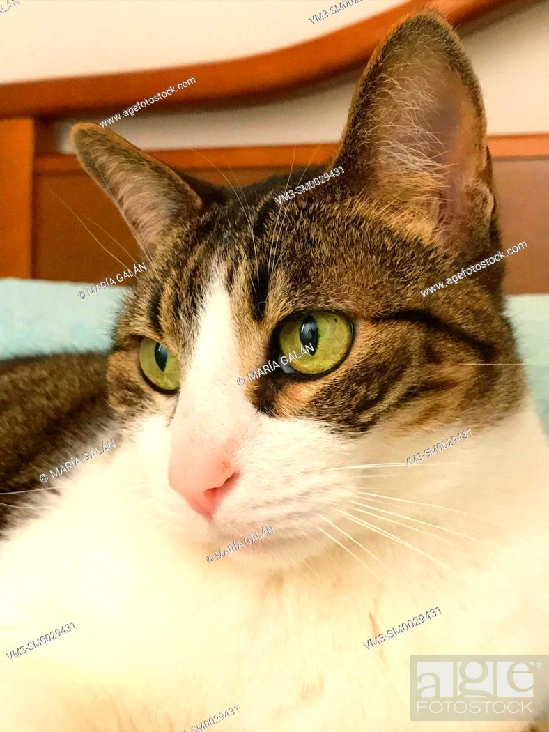 Stock Photo: Portrait of tabby and white cat. Close view.