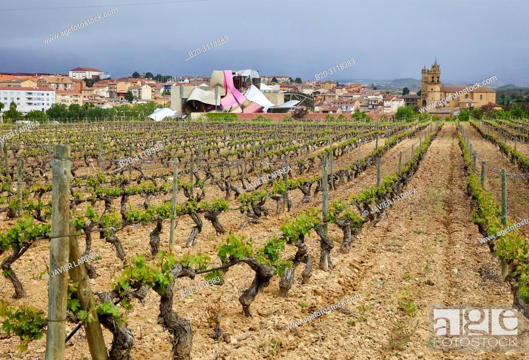 Stock Photo: Vineyard, Bodegas Marques de Riscal, Elciego, Rioja Alavesa, Araba, Basque Country, Spain, Europe.