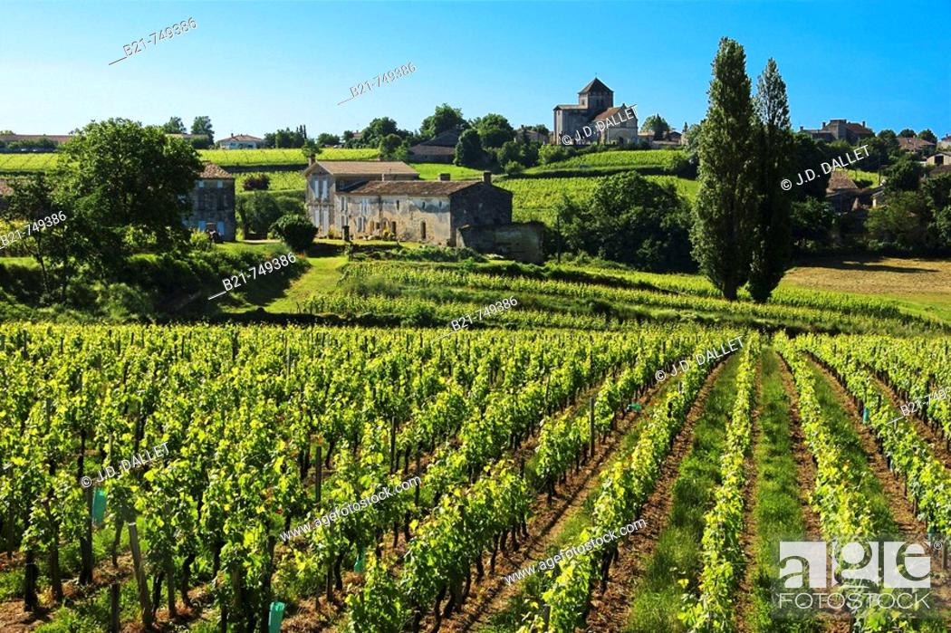 Stock Photo: France. Gironde. Montagne Saint Emilion, surrounded by vine fields, in the Bordeaux wine area.
