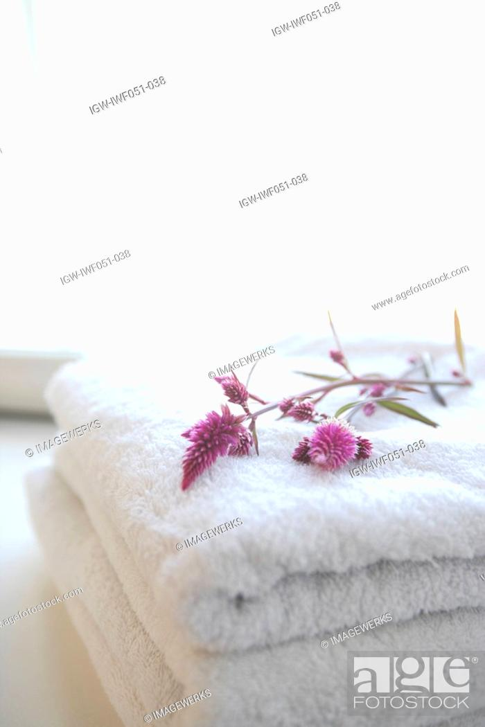 Stock Photo: Flower on folded towels.