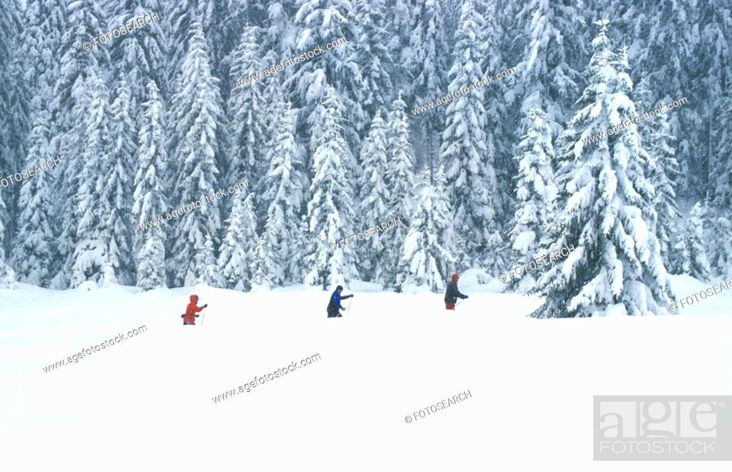 Stock Photo: Cross country skiing in the woods.